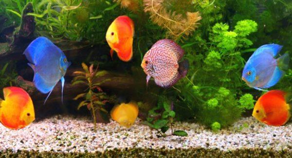 Vizhinjam Aquarium