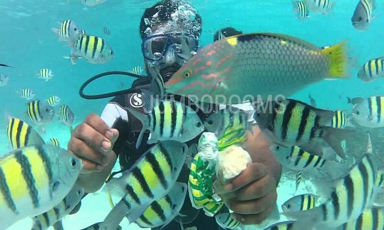 Top 10 things to do in Lakshadweep during samdram pacakge, Tourist Places And Things To Do in laksadweep